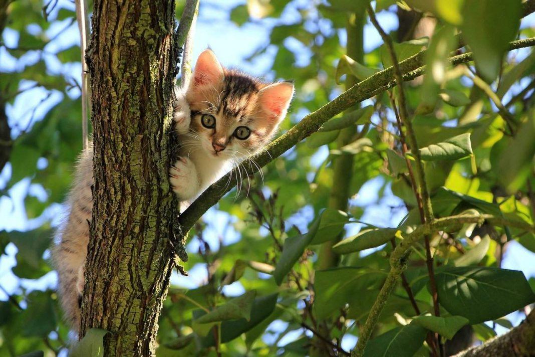 macka stoji na drvetu