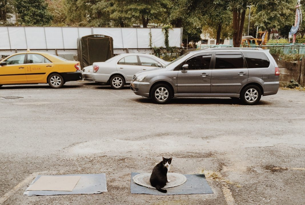 Mačka sjedi na šahtu