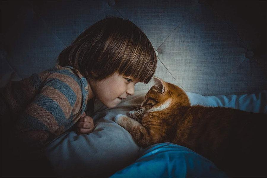 djecak i žuta mačka leže na krevetu i gledaju se