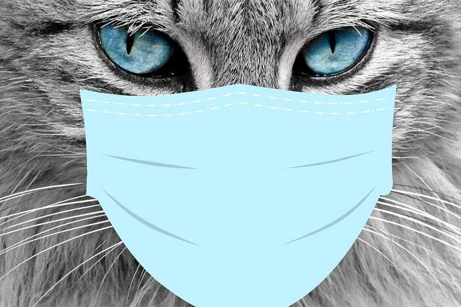 siva mačka sa plavim očima i preko nosa i usta nacrtana maska