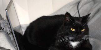 Crna mačka sa svijetlim očima leži na laptopu