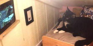crna mačka leži na svom krevetu u gleda tv