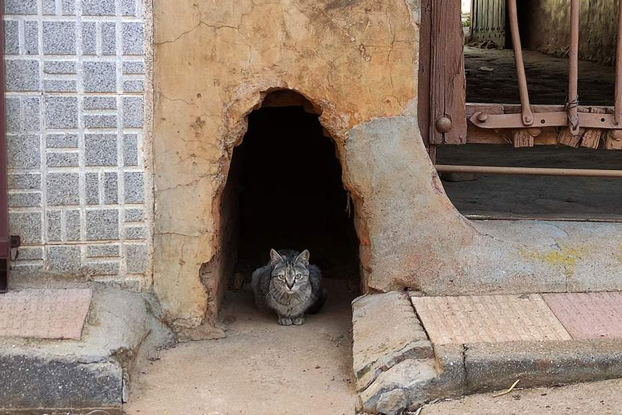 mačka viri iz rupe u zidu