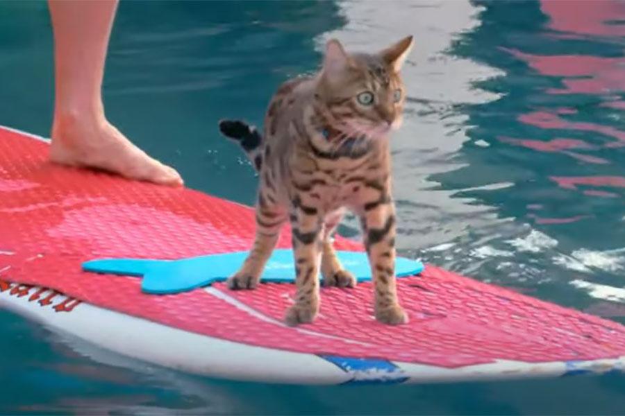 macak maverik na dasci za surfanje