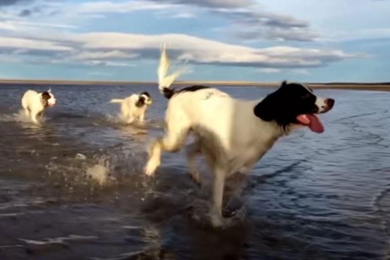tri psa trče po vodi