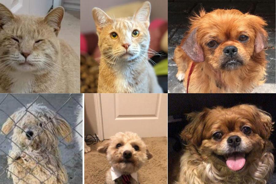 psi i mačka prije i poslije udomljenja