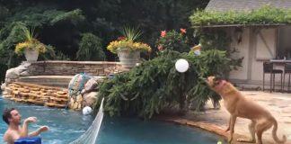 čovjek u bazenu i pas sa ivice bazena igraju odbojku