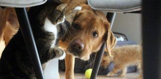 pas i mačka se kriju ispod stolica