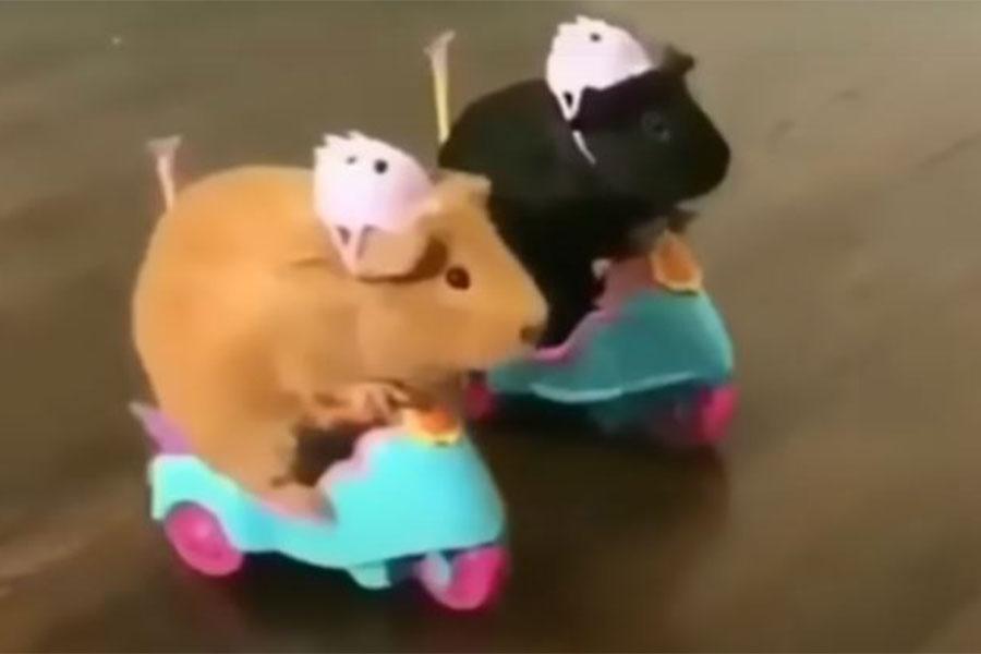 hrcči - dva hrčka na motoričima