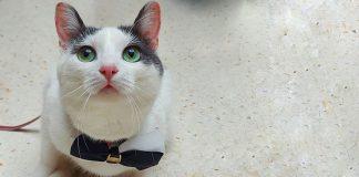 crno bijeli mačak Verdi sjedi